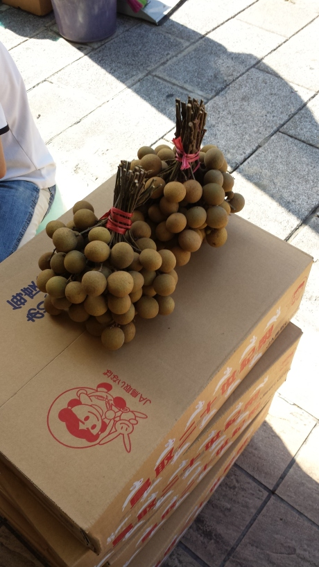 One of my most favorite fruits; longan,桂圆也。